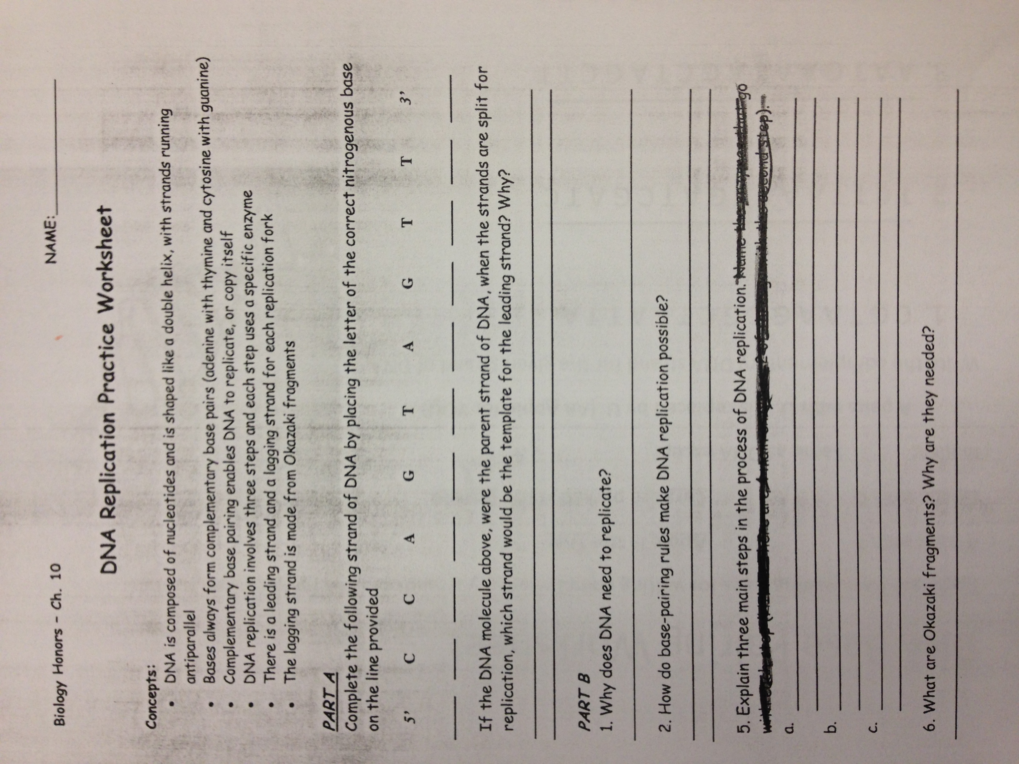 29 Rna And Protein Synthesis Gizmo Worksheet Answers ...